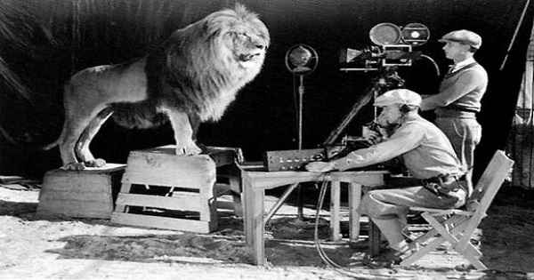 Cameramen recording the lion roar for the MGM logo WP IMAGE