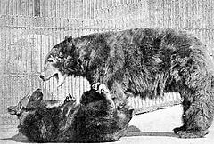 Humility Defensive Bear