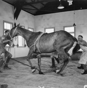 Invest Falling Horse FREE Public Domain Image