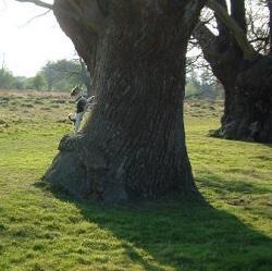 Music Critiques Barking Wrong Tree