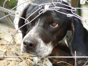 Freedom Dog Fence
