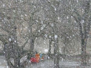 Make Time Red Jacket Snowfall
