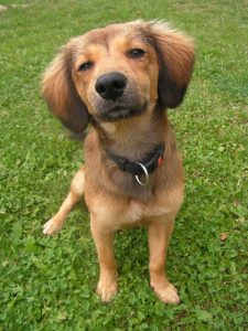 False Victim Tilted Dog Head