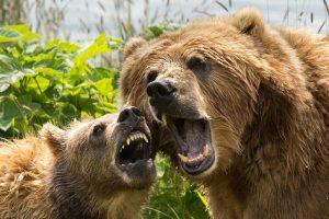 judgment-bear-cub