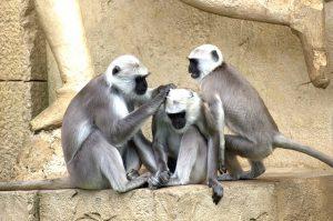 Responsible 3 Kinds of Responsible Monkeys